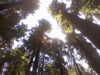 Avenue of the Giants: A Glimpse of the Creator