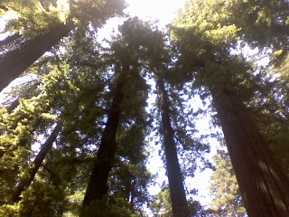 Avenue of the Giants: Reaching Out for the Invisible God